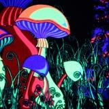 """Psywork Schwarzlicht Fluo Neon Teppich """"Magic Mushroom"""""""