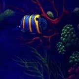 Aquarium Wandbild bei Schwarzlicht - Foto: J. Wolf / Lupo-Art