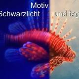 Aquarium Wandbild - Foto: J. Wolf / Lupo-Art