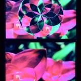 psywork-stoff-poster-blumen-schwarzlicht