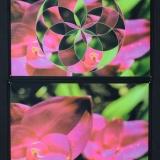 psywork-stoff-poster-blumen-taglicht